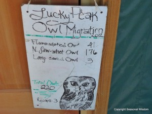 owls spotted at Idaho Bird Observatory