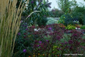 Grasses, sedums, mums, lantana, black eyed susan vine and more