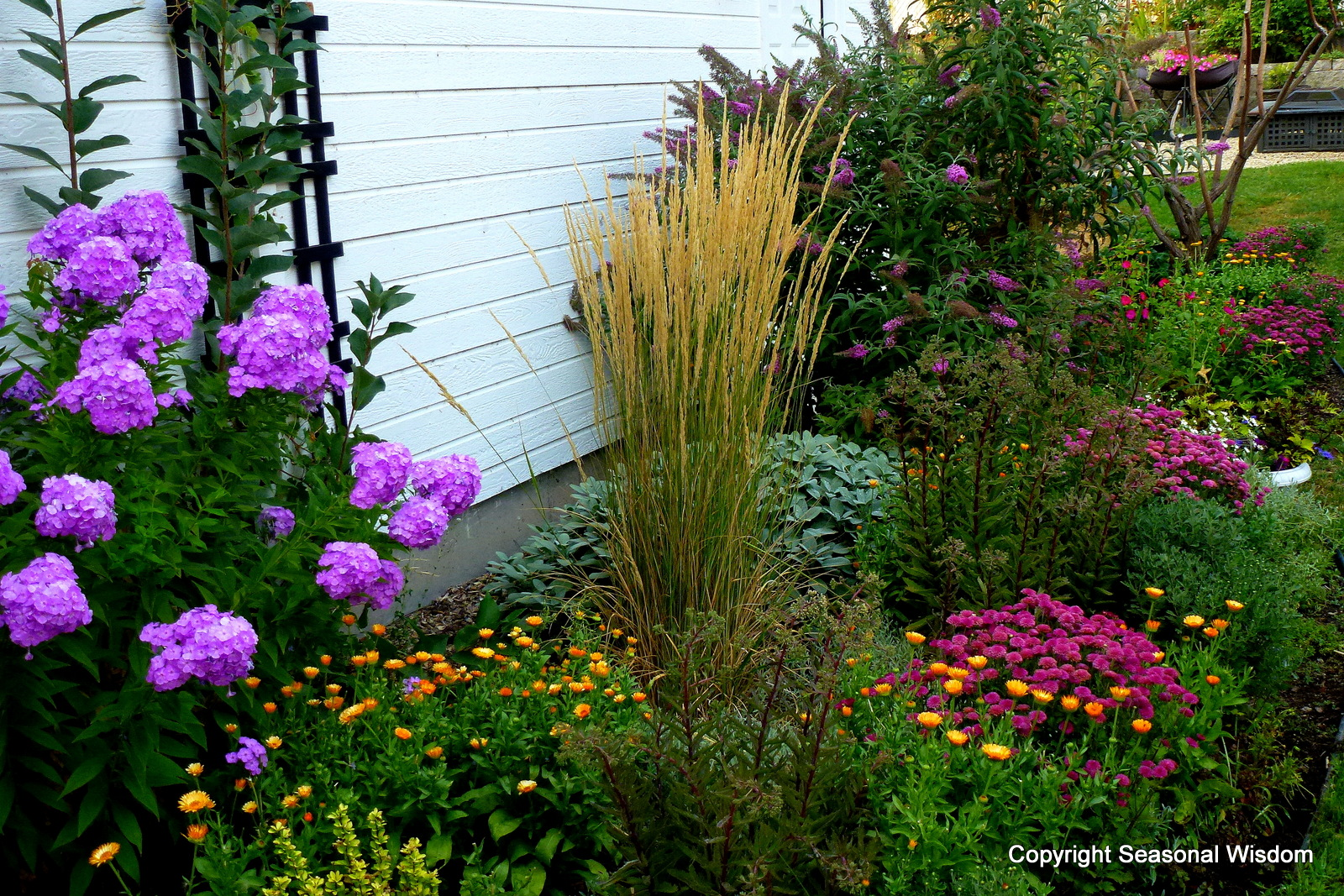 Preview new proven winners plants for Ornamental trees for flower beds