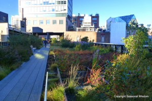 Post image for The High Line Takes Root in New York City