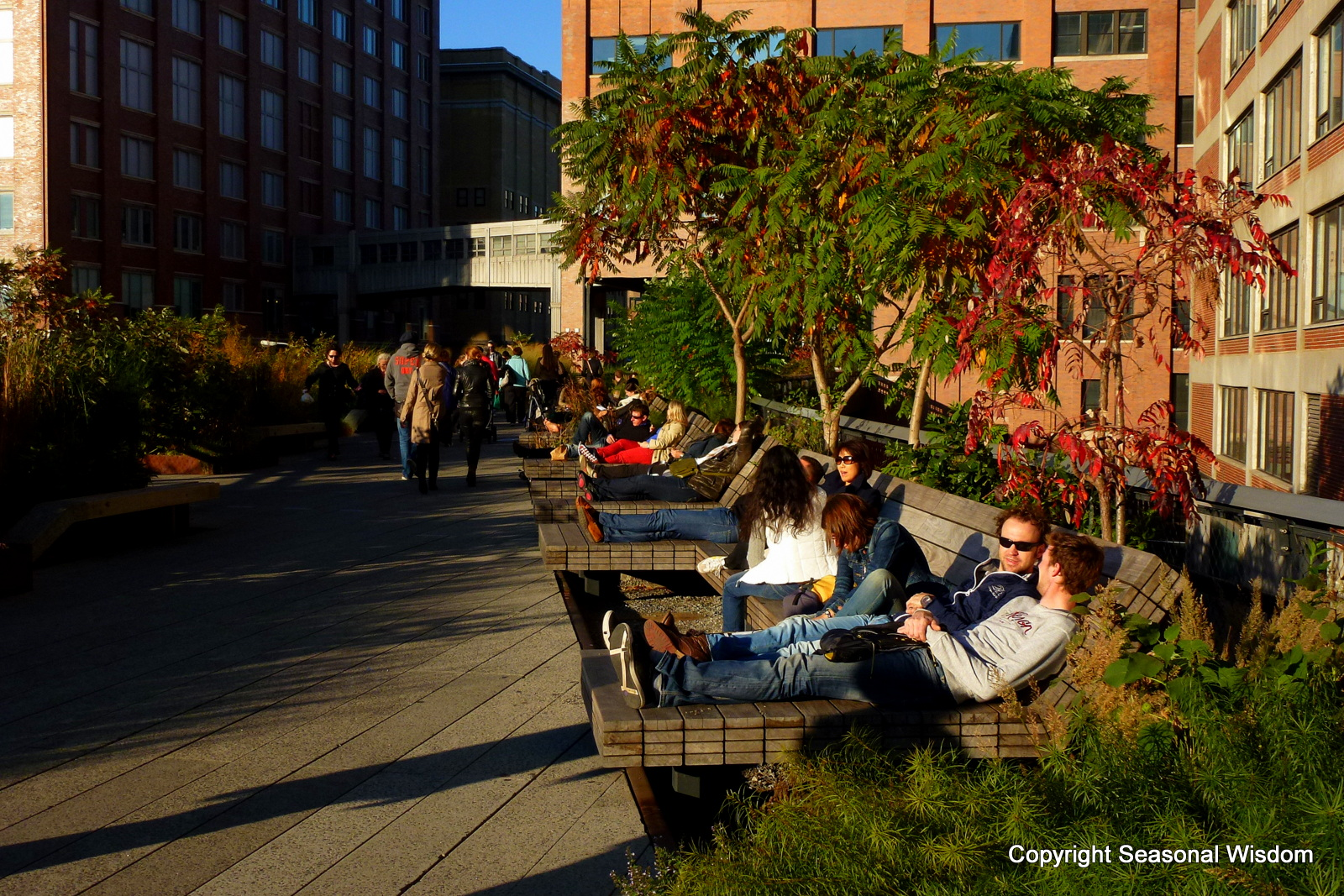 The High Line Takes Root In New York City