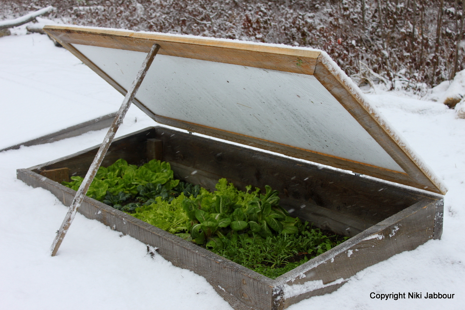 How to Grow Vegetables All Year Long Even in Winter