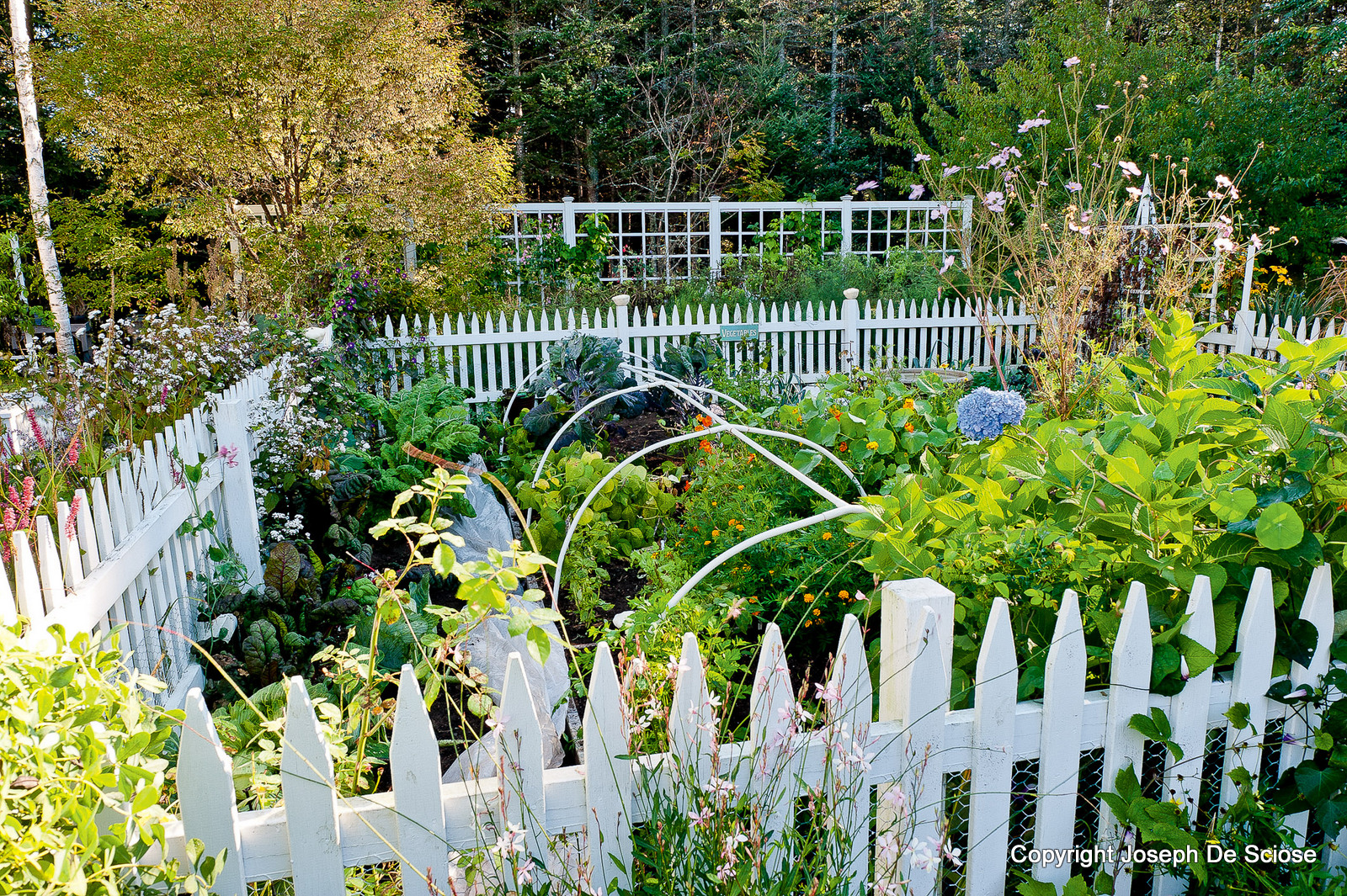 kitchen garden - Vegetable Garden Ideas New England