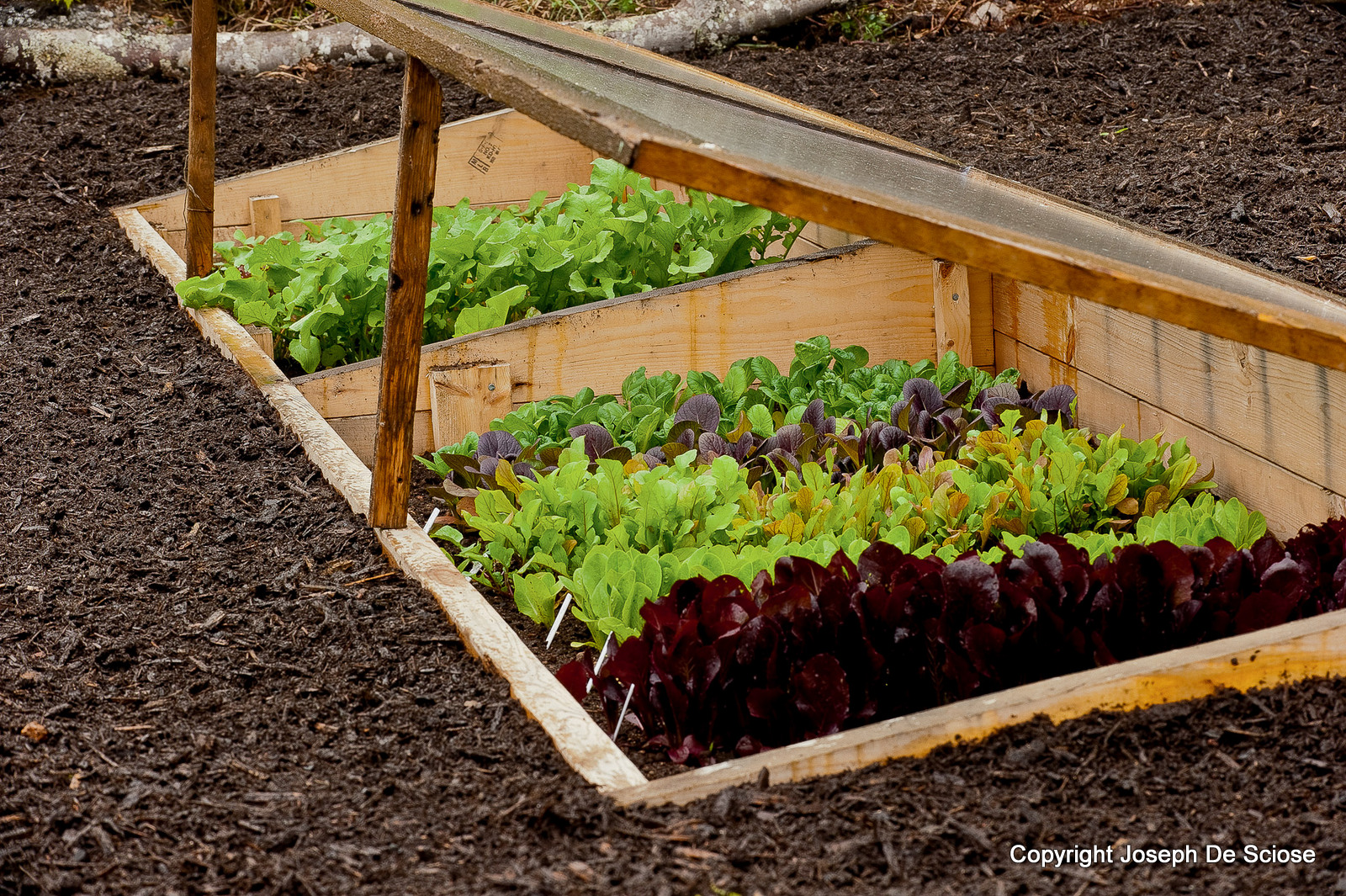Vegetable Garden Ideas New England how to grow vegetables all year long (even in winter!)