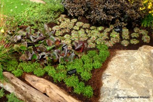 Plants snuggle among boulders at 2013 northwest flower and garden show
