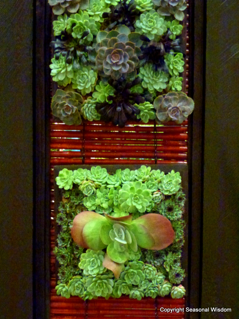 Vertical Gardens Talk At 2013 Northwest Flower Garden Show