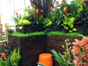 tropical plants like bromeliads, as