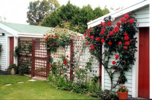 Lattice trellis with roses