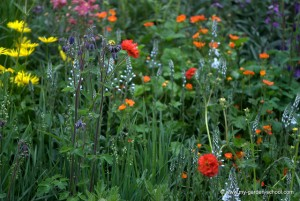 Wildflowers grow at 2013 Chelsea Flower show