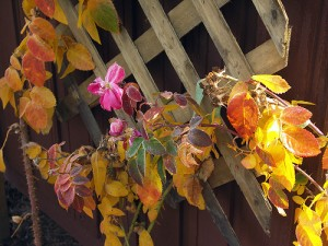 A lattice trellis in autumn