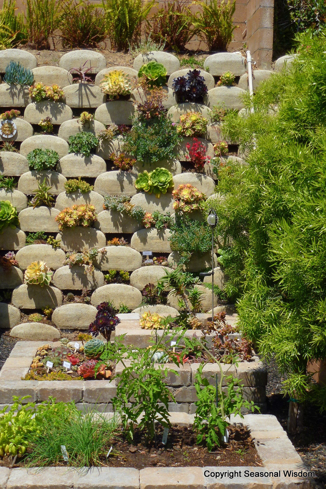 Vertical Succulent Garden In Ventura, California