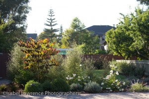 Large, medium and small plants in Billy Goodnick garden designs.