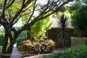 More wonderful trees and shrubs on Billy Goodnick garden tour.