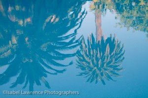 Palm trees reflect in swimming pool during Billy Goodnick garden tour.
