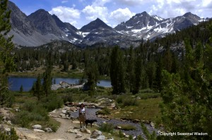 Heart Lake has wildflowers of the eastern sierras