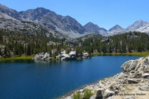 Chicken Foot Lake has Wildflowers of the Eastern Sierras