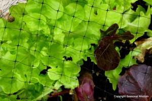 Protect fabulous plant foliage with bird netting