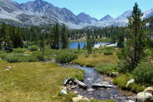 Heart Lake in 2013 still had wildflowers of the Eastern Sierras