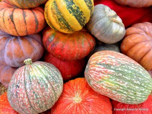 Post image for Unusual Pumpkins, Winter Squashes, Gourds