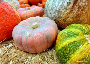 These unusual pumpkins come in yellow, green and pink colors