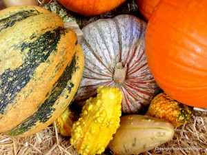 These unusual pumpkins and gourds are attractive decorations.