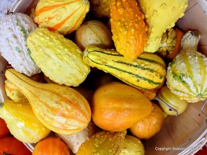 These gourds are great for around the house.