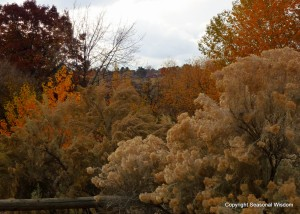 Boise native garden plants in fall
