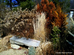 Conifers and grasses in fall garden