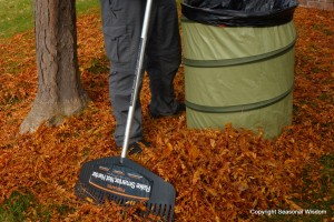 Man rakes fall leaves in garden