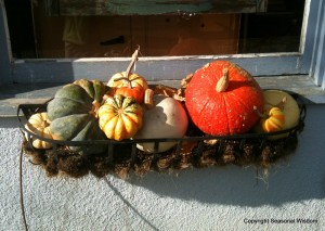 Pretty fall garden container with winter squashes