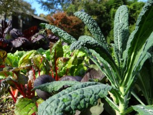 This Lacinato kale and swiss chard for recipe in The Cooking Light Pick Fresh Cookbook