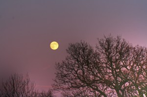 Full Moon Names include April's Pink Moon