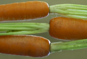 Plants with Benefits have aphrodisiac shapes like carrots.