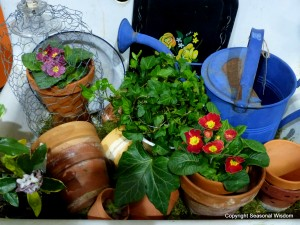 Primroses and vintage garden pots and watering cans