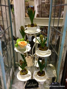 Vintage garden market with bulbs planted in tea cups