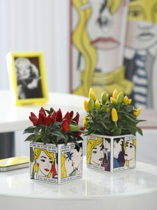 Movie cube comic planters with ornamental pepper plants in Indoor Plant Decor
