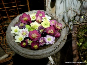 Helleborus flowers in bird bath