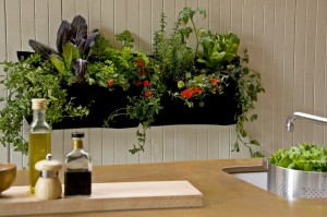 Vertical salad garden planter in kitchen