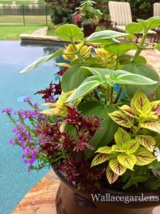 Gorgeous container garden design sits poolside in Atlanta.
