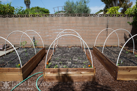 Vegetable garden tips for healthy foods for Watering vegetable garden