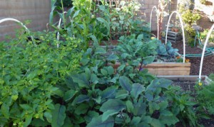 Post image for Vegetable Garden Tips for Healthy Foods
