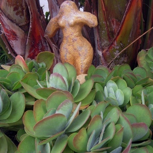 Female statue by succulents and birds of paradise in water-wise garden