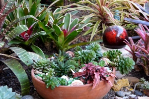 Container with succulents near bromeliads in water-wise garden