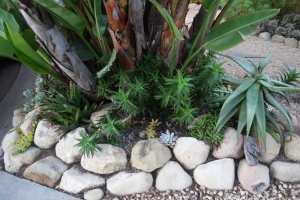 Stones and succulents in this water-wise garden