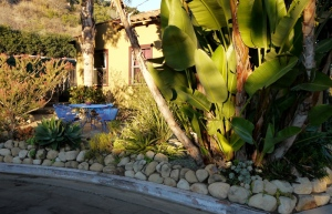 Front yard of water-wise garden at sunset