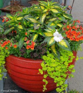 Cheerful container with flowers and fine foliage