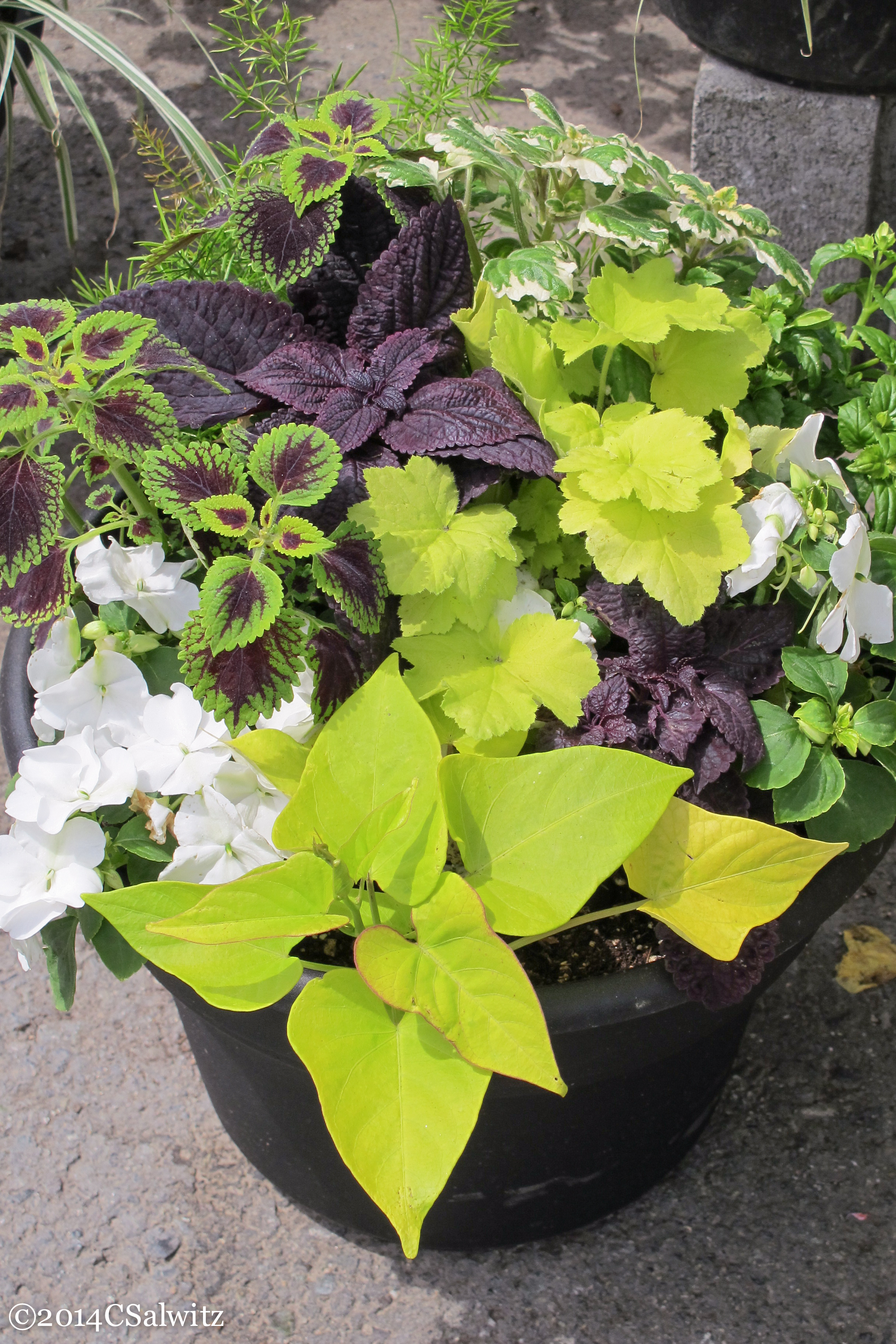 Designing gardens with fine foliage - What is lime used for in gardening ...