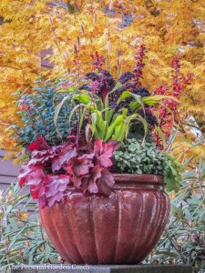 Colorful container garden with fine foliage