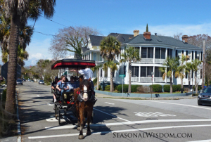 A buggy ride in Charleston, down the road from Middleton Place