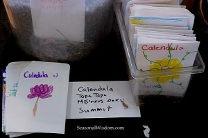 Calendula seeds for a seed swap